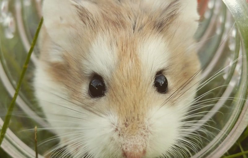 Right Hamster Cage For Your New Pet - Post Thumbnail