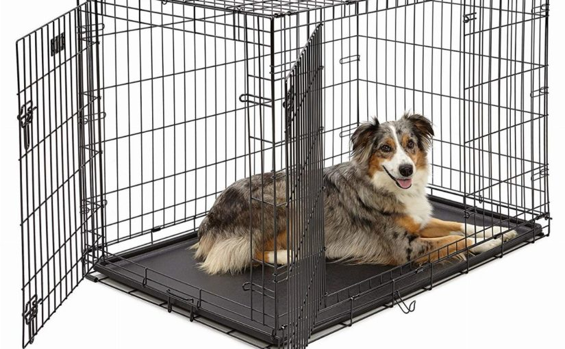 How Should Kennels for Sale Look Like - Post Thumbnail